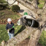 Electric Pole Saw Reviews The Best Electric Pole Saw