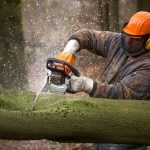 A logger using a professional chainsaw to cut up a tree trunk