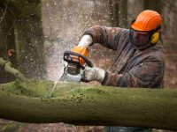 What's the Best Professional Chainsaw On The Market Within a Reasonable Budget?
