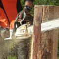 chainsaw cutting through a stump