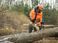How to Prevent Chainsaw Kickback: What Is It and What to Do About It?