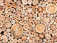 Am I Paying Too Much? How Much Should a Cord of Wood Cost?