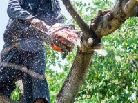 Buy with Confidence: The 5 Best Chainsaw Brands on the Market