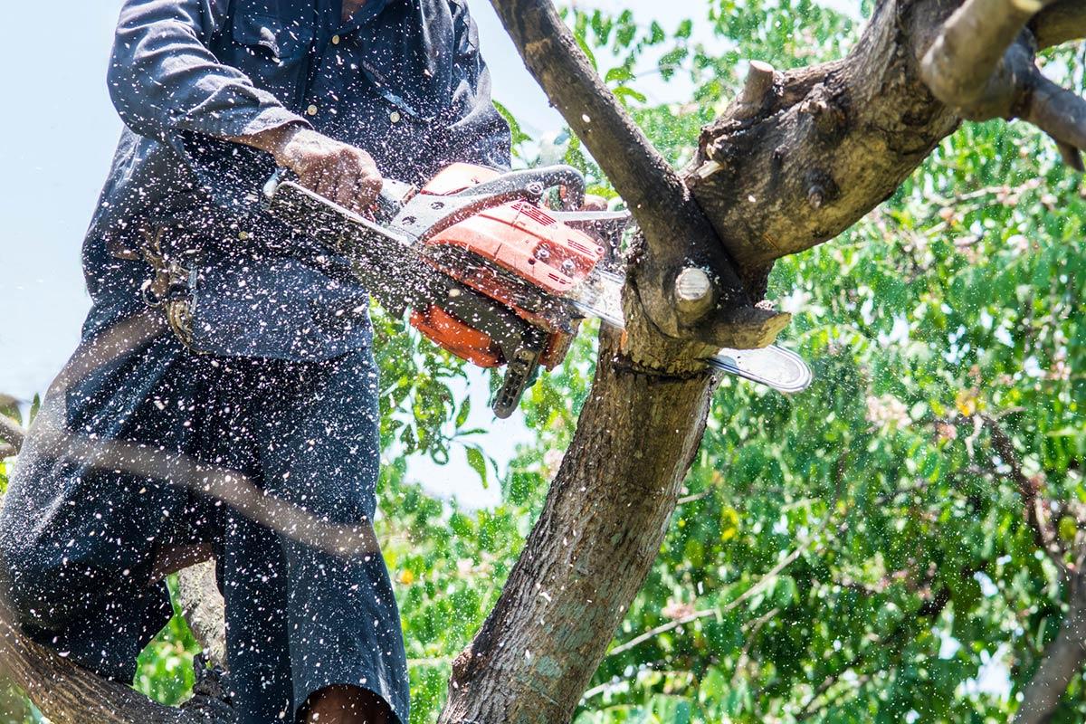 A chainsaw user cutting through a tree branch