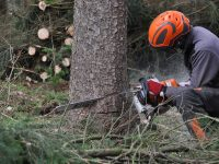 7 Must Have Chainsaw Accessories and Tools