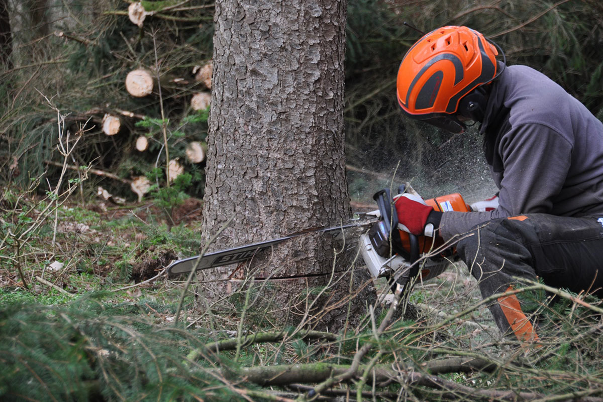 Tree logger with chainsaw accessories and tools
